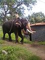Muthumalai.jpg