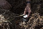 NASA Kennedy Wildlife - Alligator Eggs Temperature Measurements.jpg