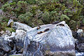 NZ160315 Milford Sound 06.jpg