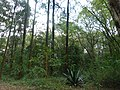 Nairobi Arboretum Park 07.JPG
