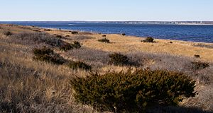 Napatree Point - Looking across the field on the north side of the peninsula, from the center, facing northwest.