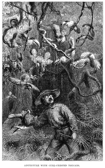 Henry Walter Bates was most famous for his expedition to the Amazon (1848-1859). Naturalist on the River Amazons figure 32.png