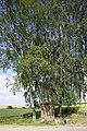 Naturdenkmal Obstbaum- und Lindenallee am Dreispitz, Kennung 81150530016, Jettingen-Sindlingen 08.jpg