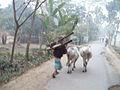 Nature of bangladesh 005.jpg