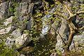 Nature water Drymona Euboea Greece.jpg