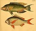 Naturgeschichte in Bildern mit erläuterndem Text (Taf. LXXXVII) (6059219968).jpg