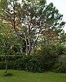 Neighbor's Yard (4892093127).jpg