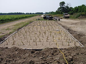 Newly planted constructed wetland.jpg