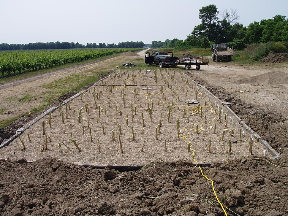 Newly planted constructed wetland