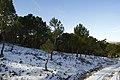 Nievecilla - panoramio.jpg