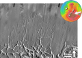 Noctis Fossae based on THEMIS Day IR.png