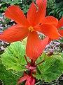 Nova Scotia Blomidon Inn Flower 18 (23461858).jpg