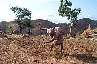 Monogamy - Woman farming, using a digging stick in the Nuba Mountains, South Sudan.
