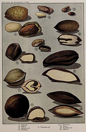 Nuts (2), illustration