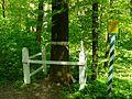 Oak in Kholodny yar.jpg