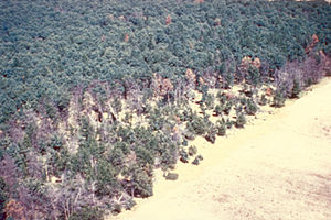 Oak wilt aerial photo.jpg