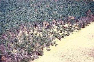 Oak wilt - Aerial photograph of an oak wilt center (St. Paul, MN). Robert L. Anderson, USDA Forest Service, Bugwood.org