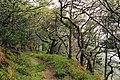 Oare, Culbone Wood - geograph.org.uk - 98335.jpg