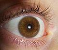 Occhio nocciola.jpg