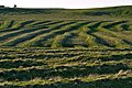 Old Peat Beds - geograph.org.uk - 9698.jpg