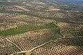 Olive orchards Córdoba.jpg