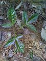 On dirait des plantes artificielles (4640269416).jpg