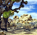 One of the Ancients, Joshua Tree NP 2013 (22786265175).jpg
