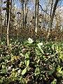 Ontario flowers.jpg