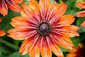 Orange Red Flower (5982185396).jpg