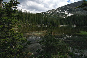 Colorado Rockies forests - Spruce forest in the Colorado Rockies