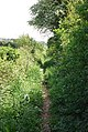 Overgrown footpath (bridleway) near Thornicombe Farm - geograph.org.uk - 423583.jpg