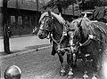 Paarden van de Heineken Brouwerij in Amsterdam, Bestanddeelnr 189-0519.jpg