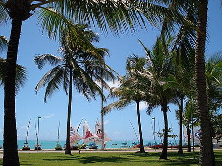 Coconut palms in the warm, tropical climate of northern Brazil Pajucara.jpg