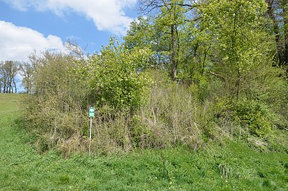 Pannonischer Mischwald Töllergraben GLT 0028 (02).jpg
