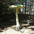 Park grzybowy w Pilce (Amanita phalloides).JPG
