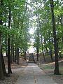 Park w Gumniskach, Tarnów - Gumniska (-) 10 pavw.JPG