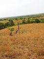 Parque nacional Aguaro-Guariquito 003.jpg