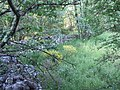 Paseo junto al Camping Santa Colomba - panoramio.jpg