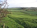 Pasture near West Horton - geograph.org.uk - 312645.jpg