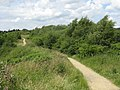 Path By The Railway - geograph.org.uk - 1398823.jpg