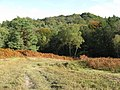 Path approaching wooded area of Ashdown Forest - geograph.org.uk - 1535106.jpg
