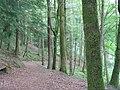 Path in the woods at Drumlanrig - geograph.org.uk - 1369945.jpg