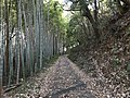 Path near Shin-Toyotsu Station 3.jpg