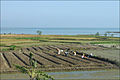 Paysage au sud de Hué (4393646537).jpg