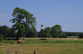 Paysage près de Heidmühlen en été.jpg