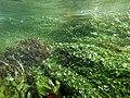 """Paysage subaquatique Subaquatic landscape rivière """"Les Baillons"""" à Enquin-sur-Baillons F Lamiot 10.jpg"""