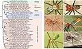 Pholcidae (10.3897-zookeys.789.22781) Figure 4.jpg