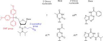 Nucleoside phosphoramidite - Protected 2'-deoxynucleoside phosphoramidites.