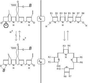 Phytochrome