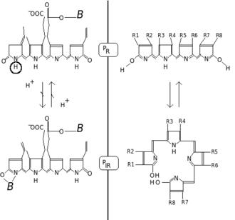Phytochrome - Image: Phytochrome str